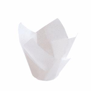 Tulppaanivuoka valk